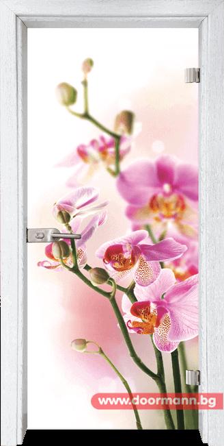 Стъклена врата модел Print 13-2 - Бреза